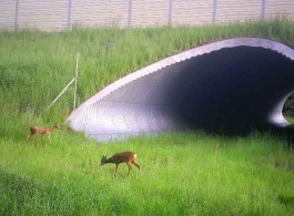 Moose, roe deer, foxes and hares. Who else uses the underground passages on the M6